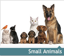 cat small animals